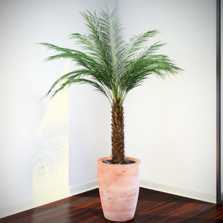 3d model phoenix palm