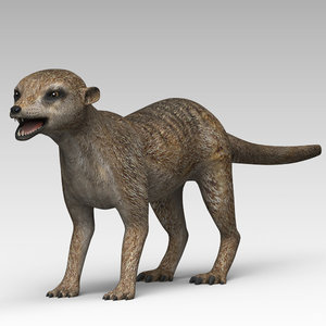 3d meerkat cheetah3d model