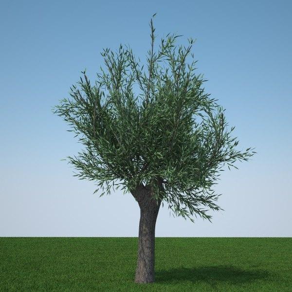3d pollard willow tree model