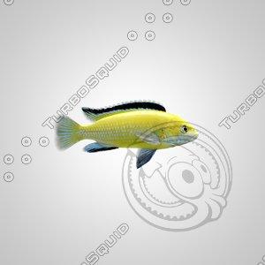 fish labidochromis caeruleus yellow 3d obj
