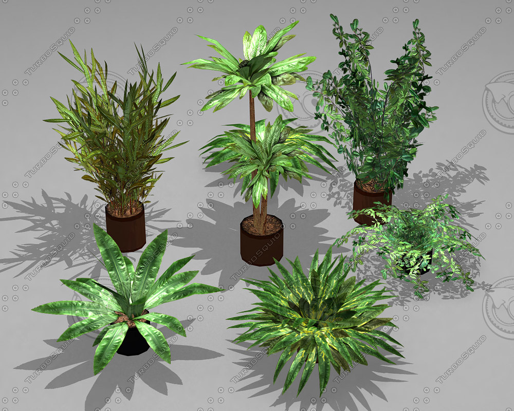 max potted plants pack 7