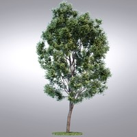 HI Realistic Series Tree - 012