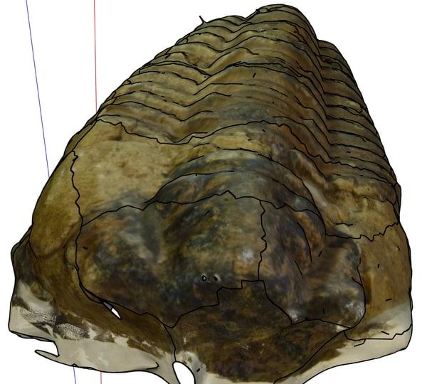 maya fossilized trilobite