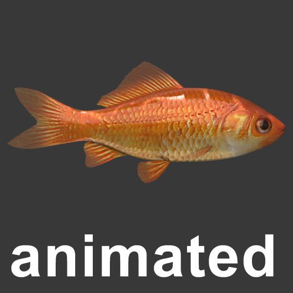max gold fish