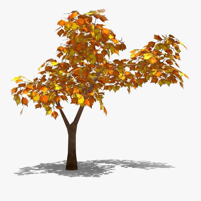 autumn orange leaf tree 3d model