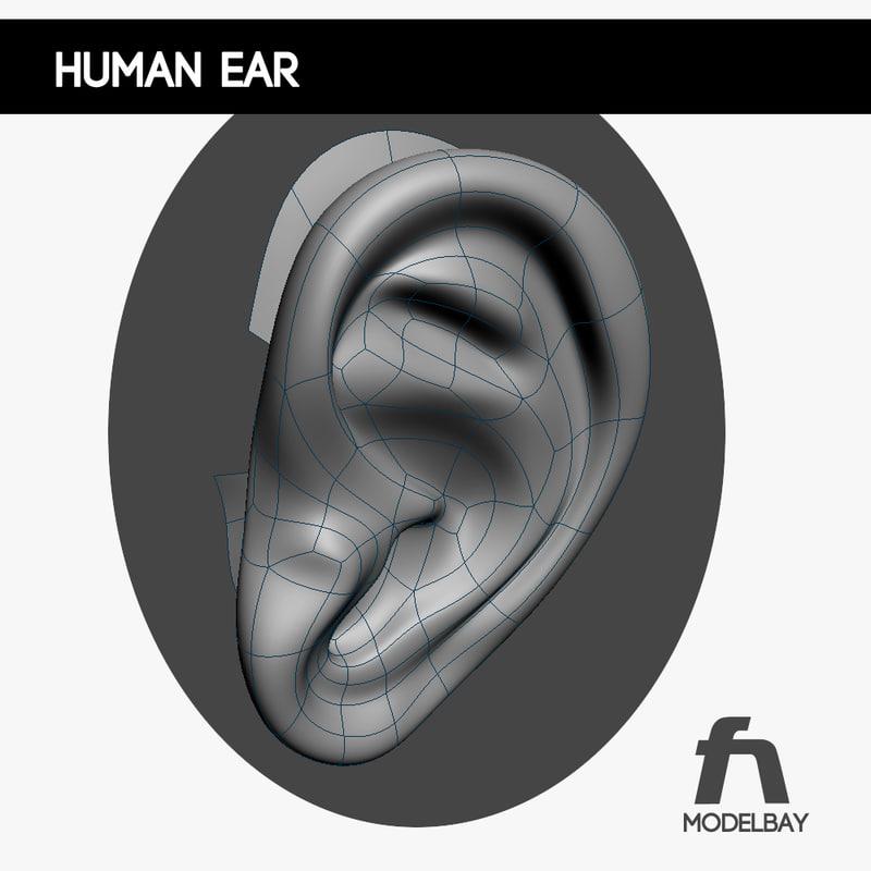 human ear 3d max