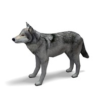 wolf rigged animation x