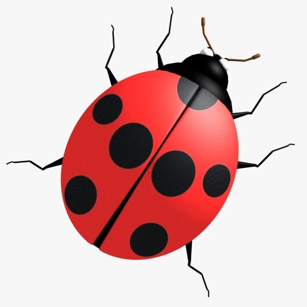 ladybug bug 3d max