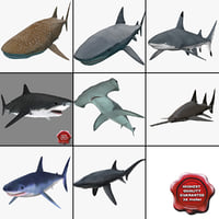 Sharks Collection 5