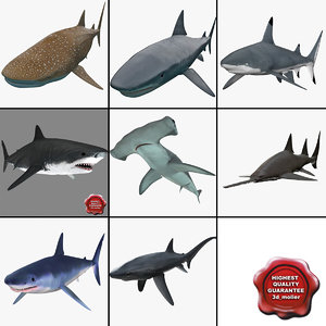 shark 5 sawfish mako 3d max