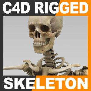human skeleton rigged skull cranium c4d