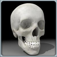 male skull 3d max