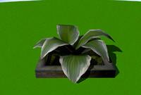 maya plant flower