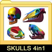 3d cat rat skull