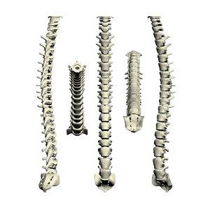 3d model human spine 2010