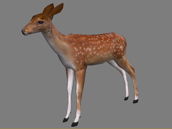 fallow deer summer 3d model