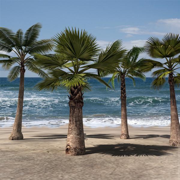 3d palm tree pack