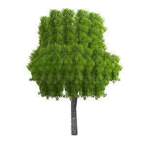 3dsmax pc tree