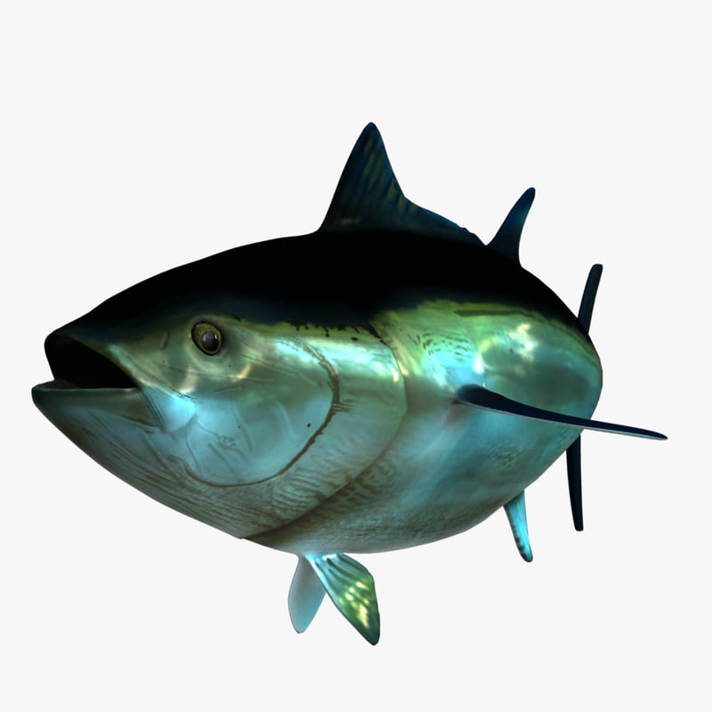 giant bluefin tuna 3d model