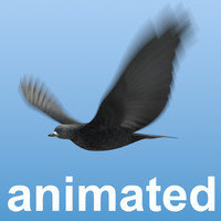 bird flock animation 3d 3ds
