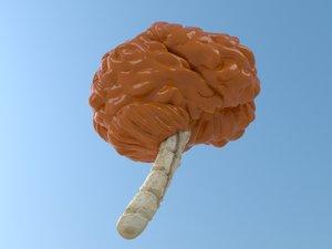 3d resolution brain model