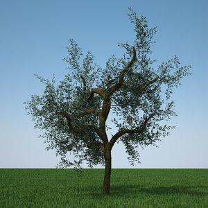 3d olive tree