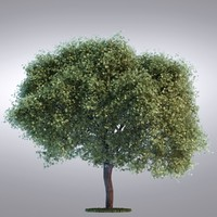3d hi realistic series tree