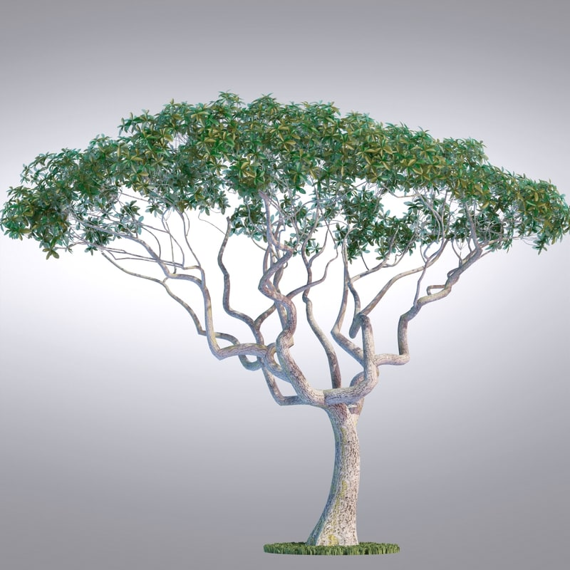 3d model realistic tree