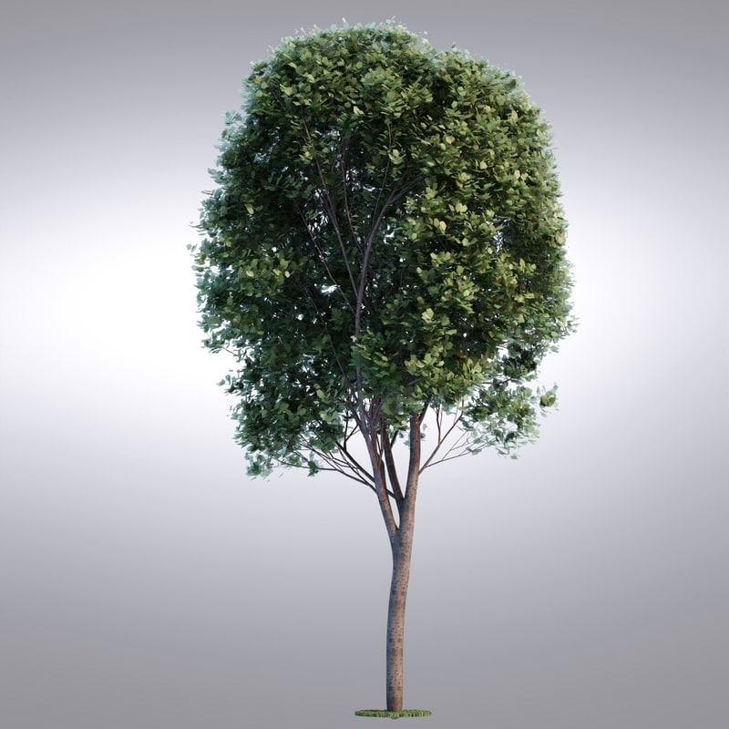 max realistic tree