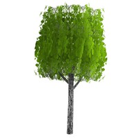pc tree 3d c4d