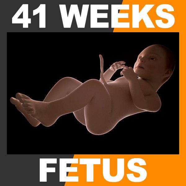 3d 41 weeks human fetus
