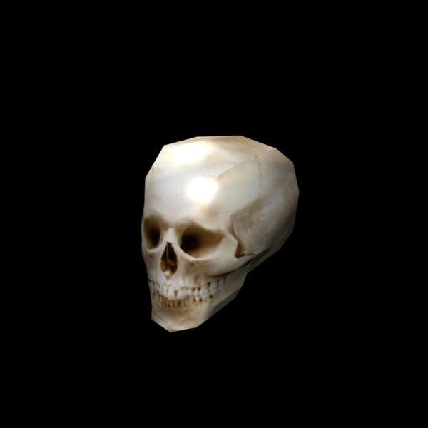 3d human skull