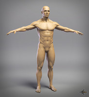 3d model of male anatomy 4r4 p2