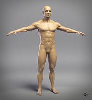 3d model of male anatomy 4r4 p2
