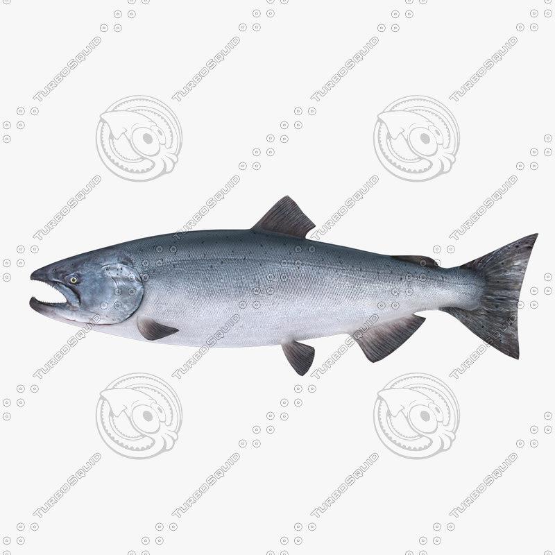 fish salmon 3d max