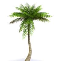 3d model palms tree