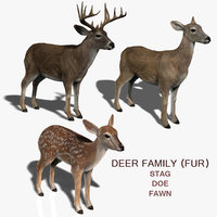 3d model deer family fur