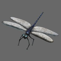 dragonfly fly 3d model