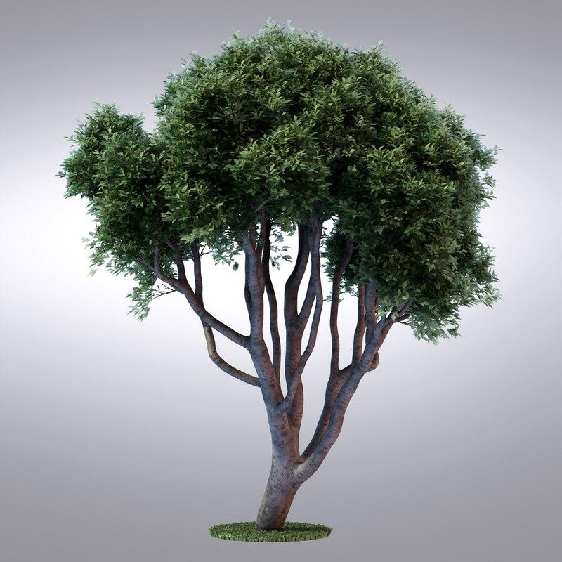 3d max hi realistic series tree