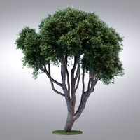 HI Realistic Series Tree - 015