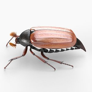bug closed wings 3d 3ds