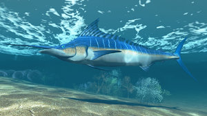 blue marlin 3d model