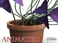 oxalis triangularis flowers 3d max