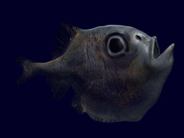 half naked hatchet fish 3d model