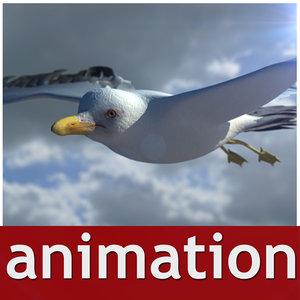 seagull animation 3d model