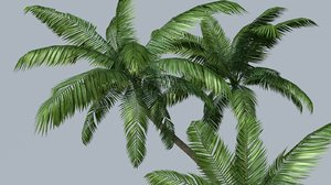palm trees c4d