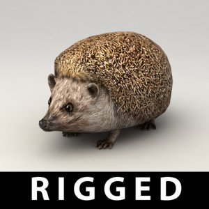 3d rigged hedgehog model