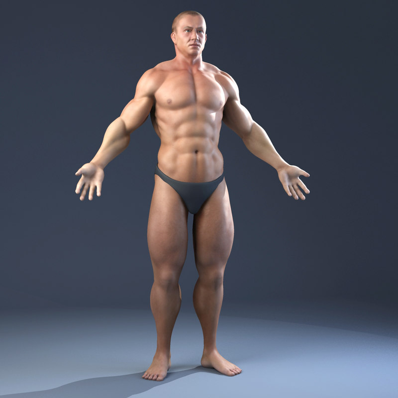 Realistic Anatomy Skeleton Muscles
