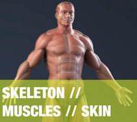 3d realistic anatomy skeleton muscles model