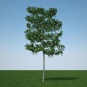obj common lime tree